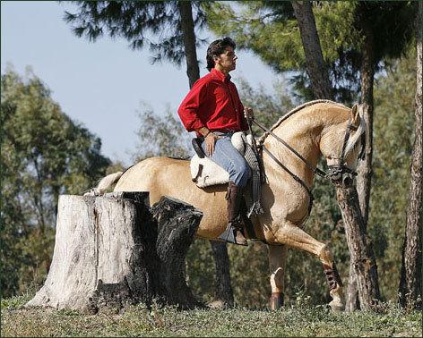 PINOS Y MARISMA. Sus caballos entre los pinos
