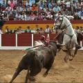 Revuelo caballo de Ventura